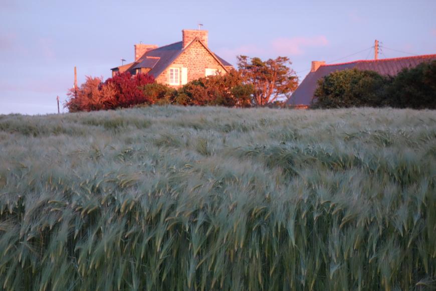 Das Meer und ein Meer von Weizen sind nahe beim Ferienhauss
