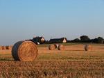 Über das abgeerntete Weizenfeld blickt man zum Ferienhaus
