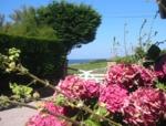Vor dem ferienhaus blühen Hortensien.